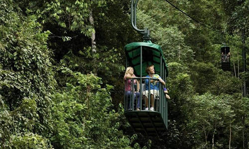 Aerial Tram in the Rainforest