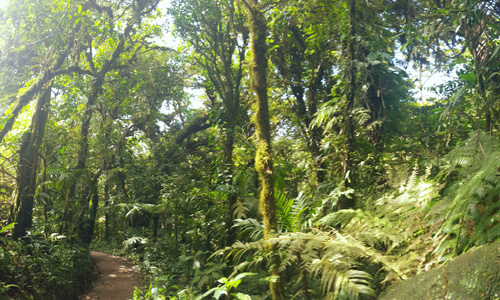 Tour Trail in the Costa Rica Cloud Forest