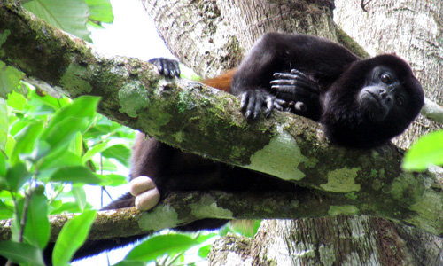costa rica national park tours