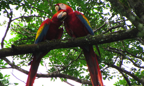 national park tours in costa rica