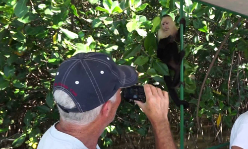 where to see monkeys in costa rica